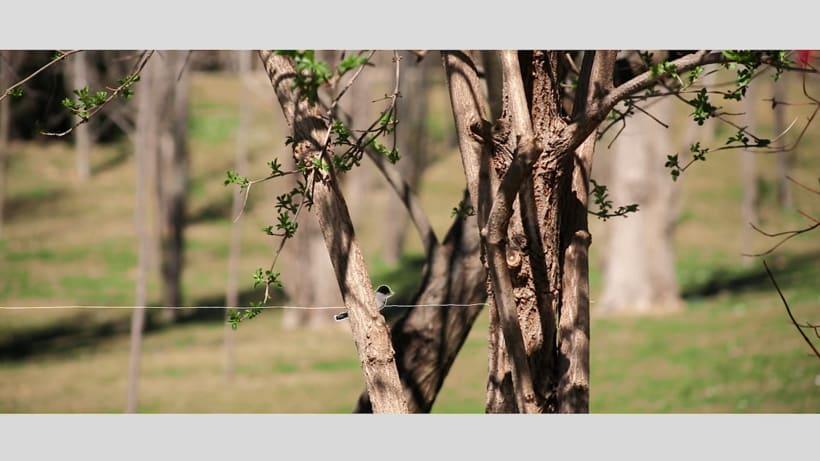 Autumn Lines | Video conceptual  0