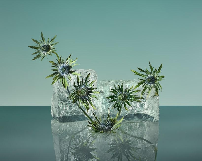 Freezing Flowers  1