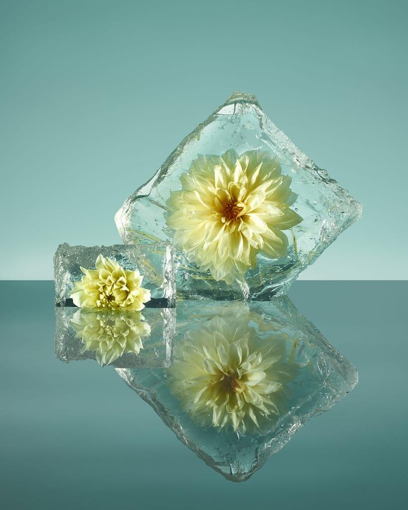 Freezing Flowers  6
