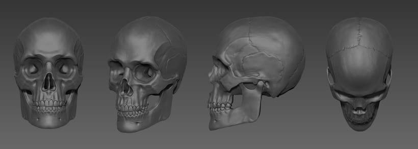 Skull Anatomy study -1