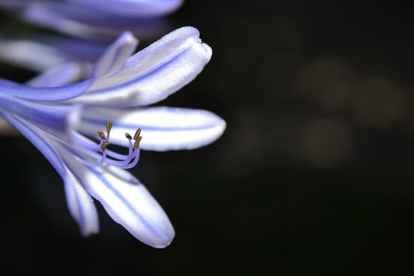 Botánico - Macro 2