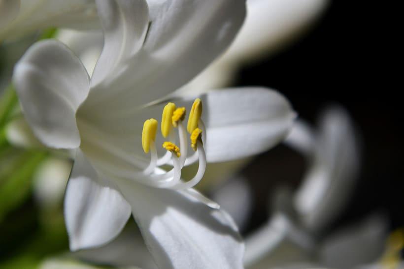 Botánico - Macro 16
