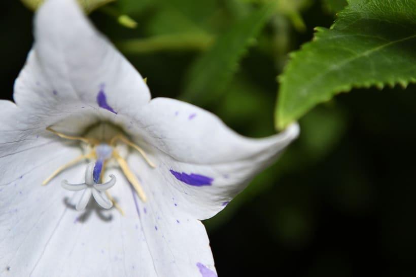 Botánico - Macro 7