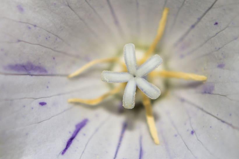 Botánico - Macro 14