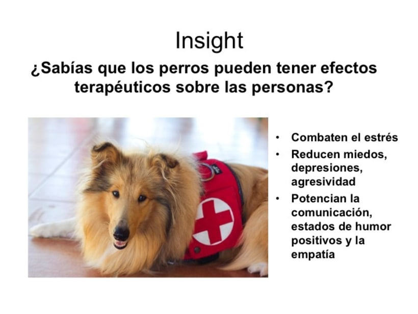 perroterapia.com ¿sabías que los perros pueden tener efectos terapéuticos sobre las  personas? 1