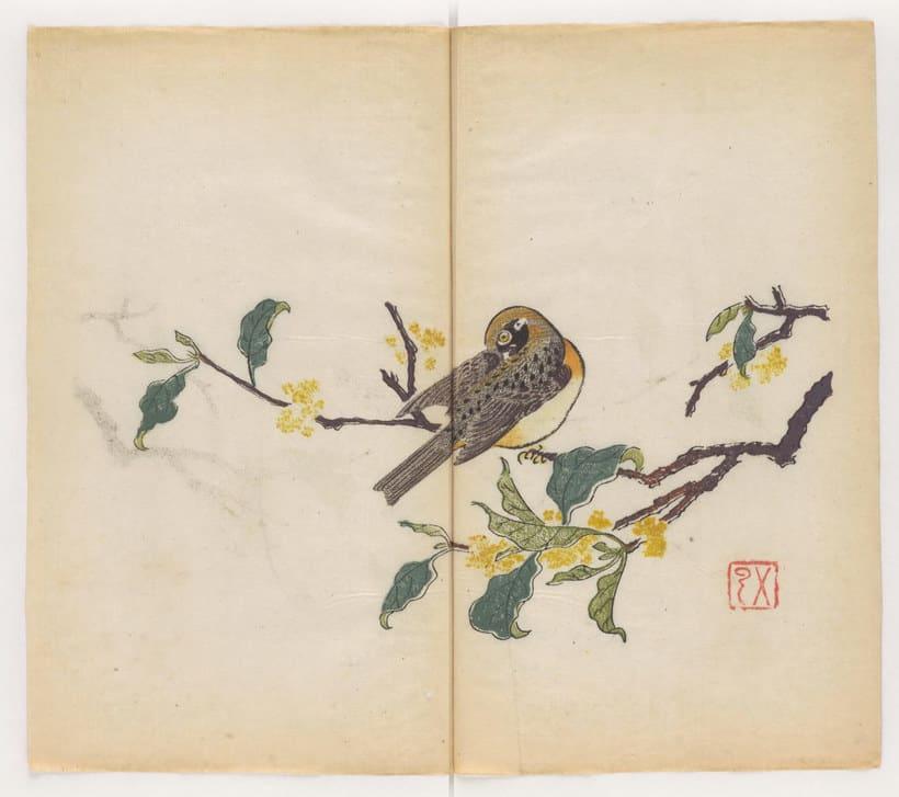 Explora el cuaderno impreso a color más antiguo del mundo 6