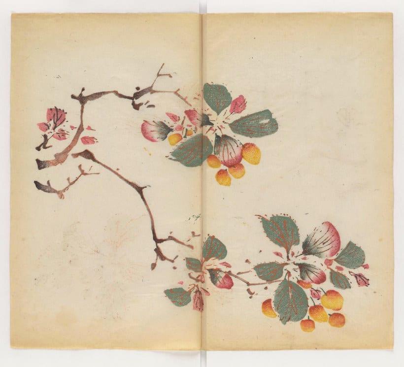 Explora el cuaderno impreso a color más antiguo del mundo 12