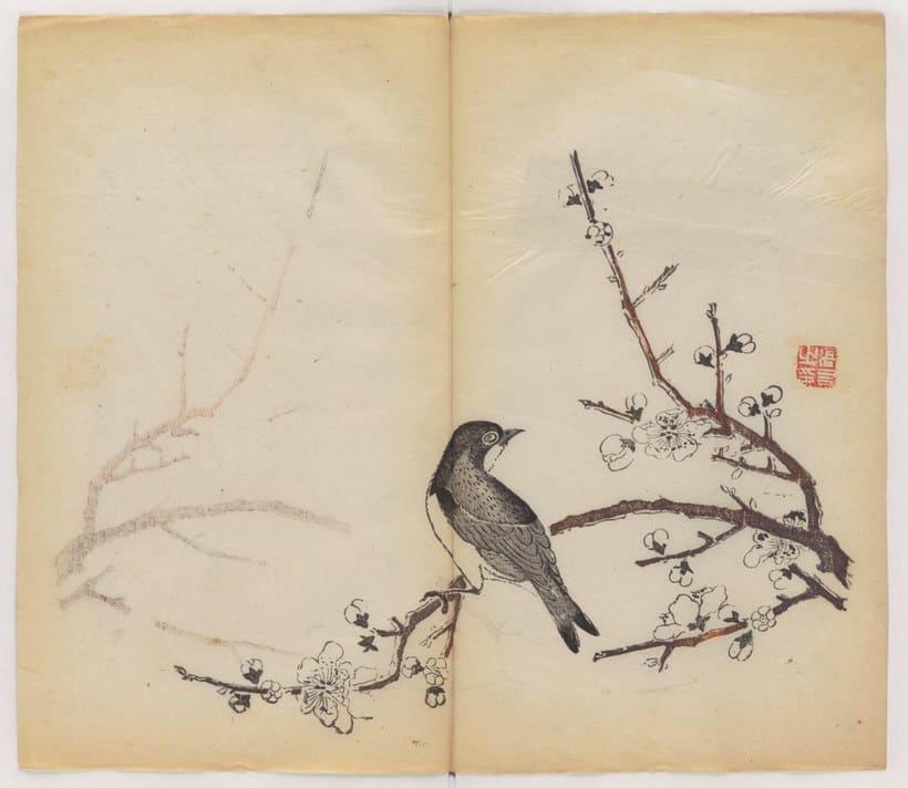Explora el cuaderno impreso a color más antiguo del mundo 13