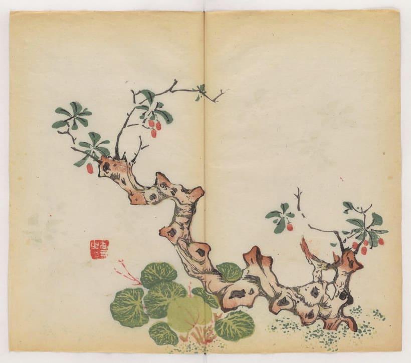 Explora el cuaderno impreso a color más antiguo del mundo 15