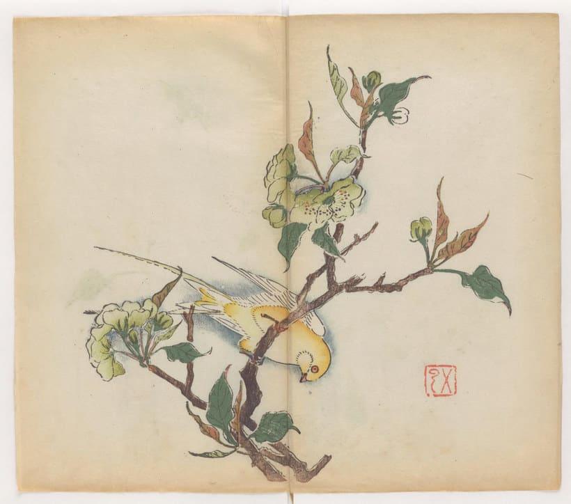 Explora el cuaderno impreso a color más antiguo del mundo 16