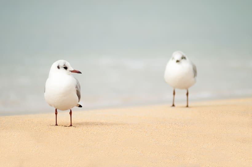 Playa de Palma 2