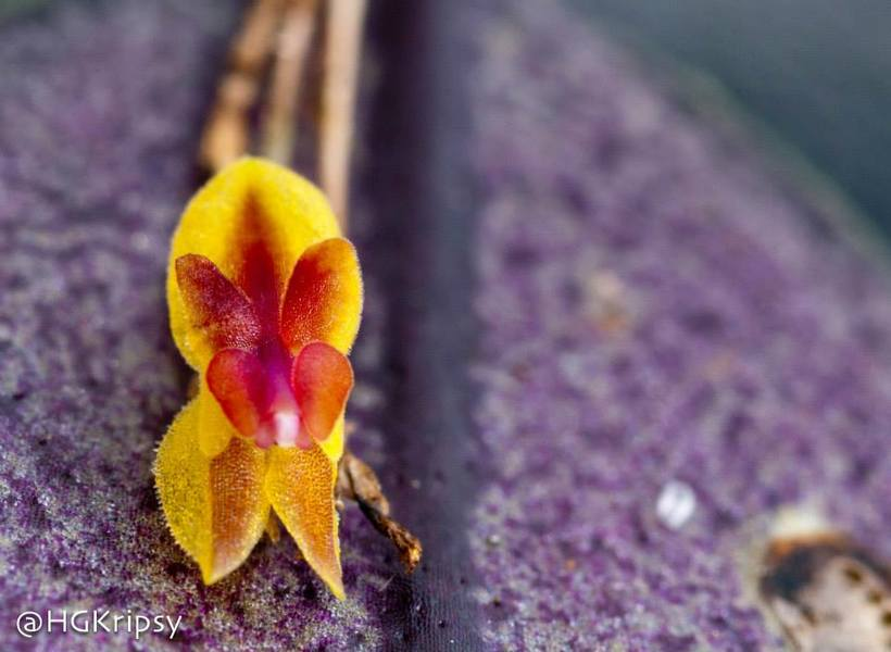 Orquídeas -1
