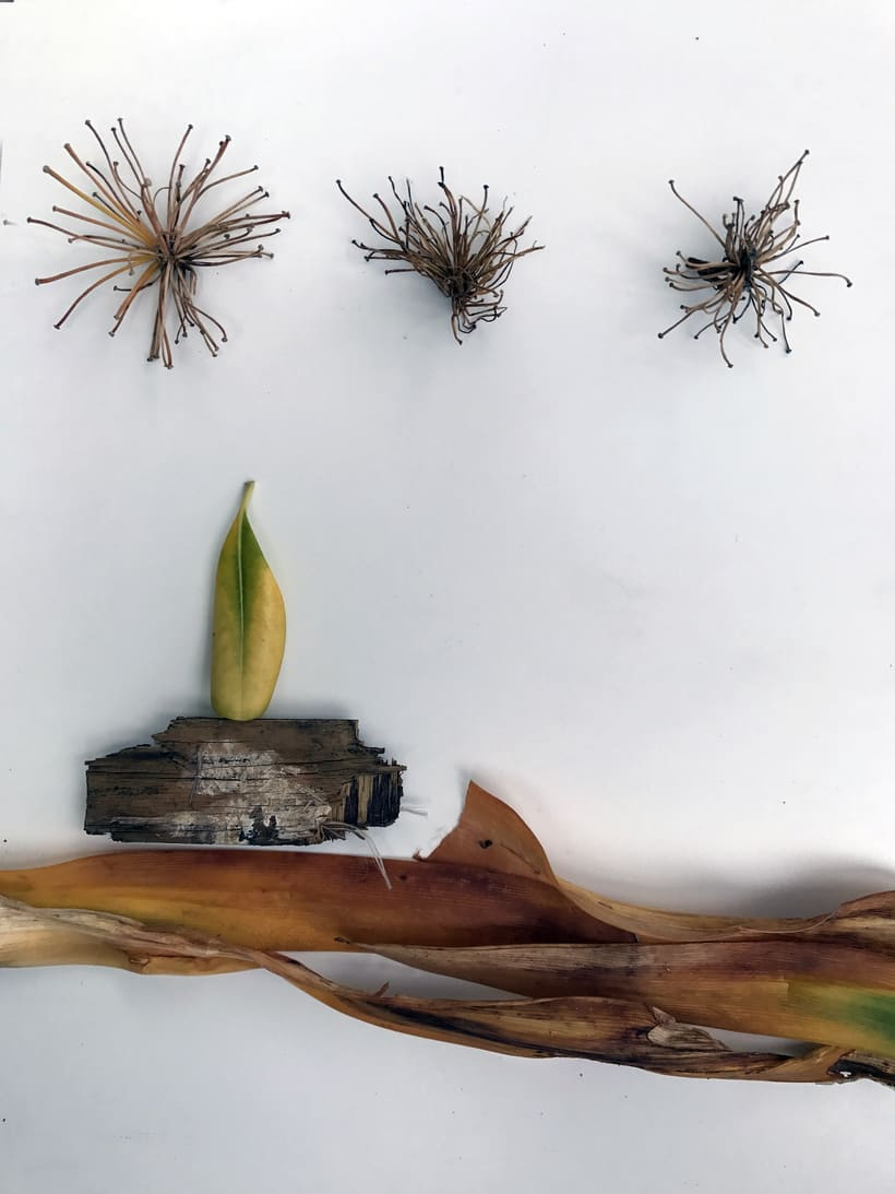 Mi Proyecto del curso: Las leyes de la percepción visual: unidad, peso, equilibrio y movimiento 2