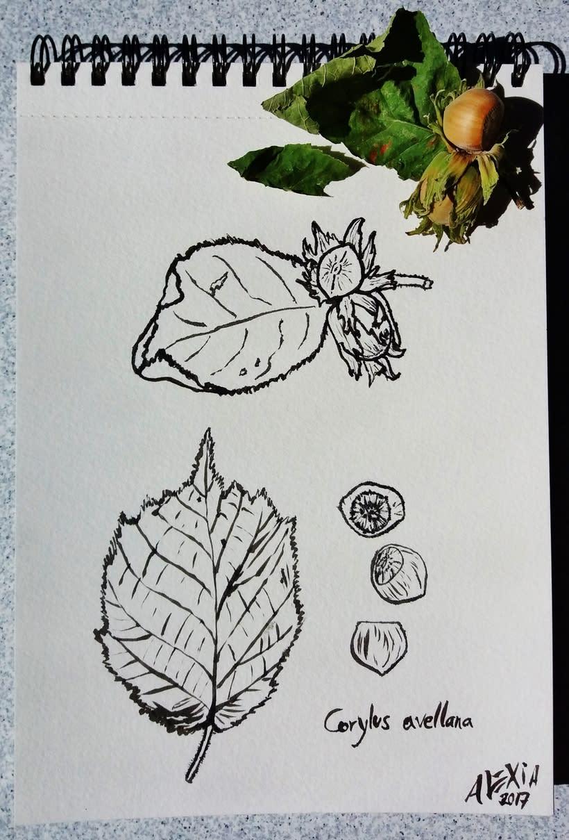 Ilustraciones 2017 41