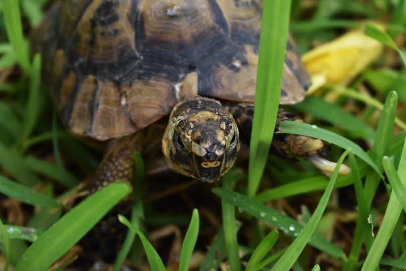 Mi Proyecto del curso: Introducción a la Fotografía digital. Día de paseo, observando animales. 13