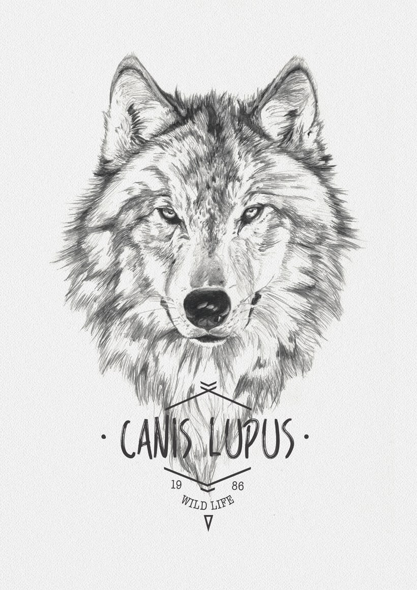 CANIS LUPUS -1