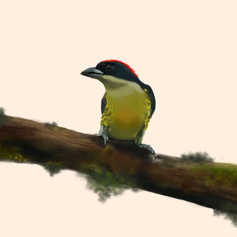 Aves - Biodiversidad 12