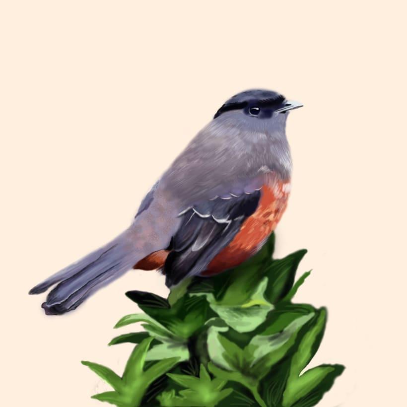 Aves - Biodiversidad 13