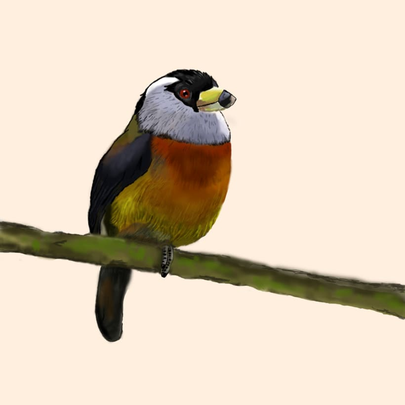 Aves - Biodiversidad 14