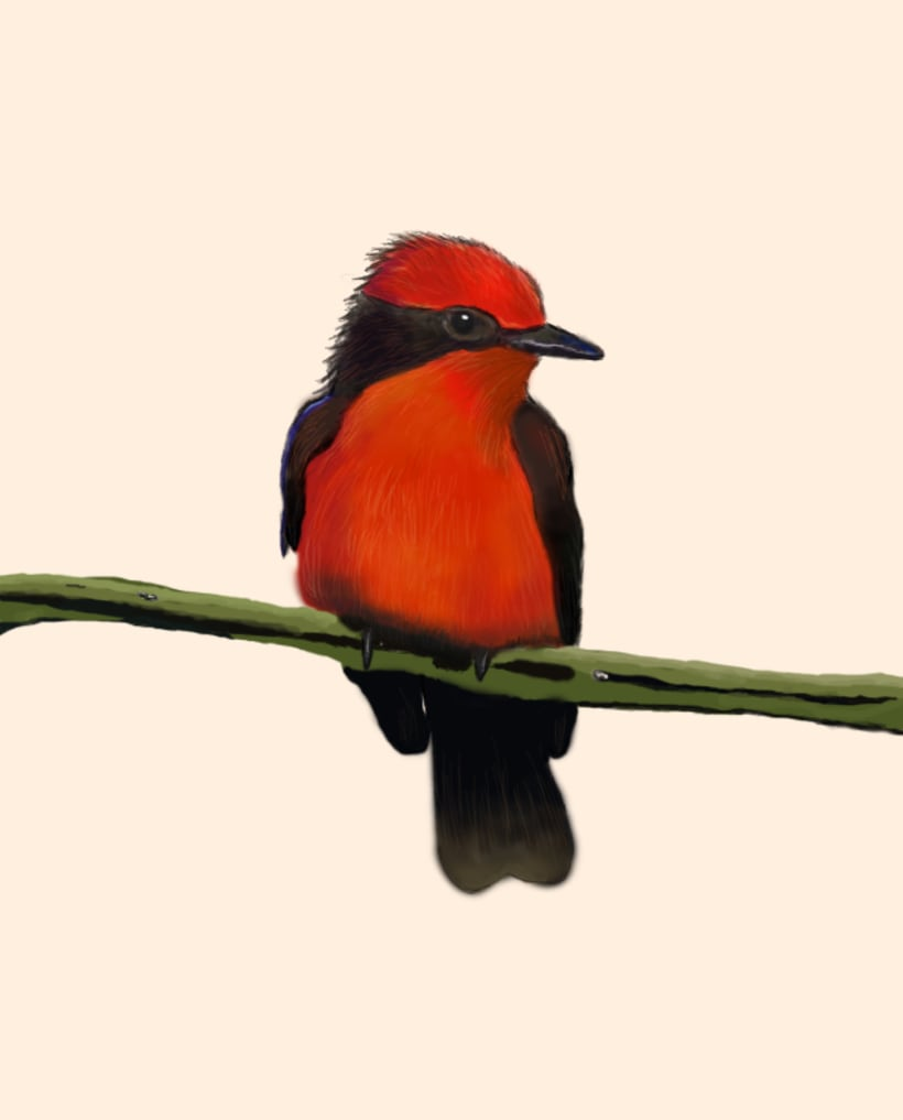 Aves - Biodiversidad 11