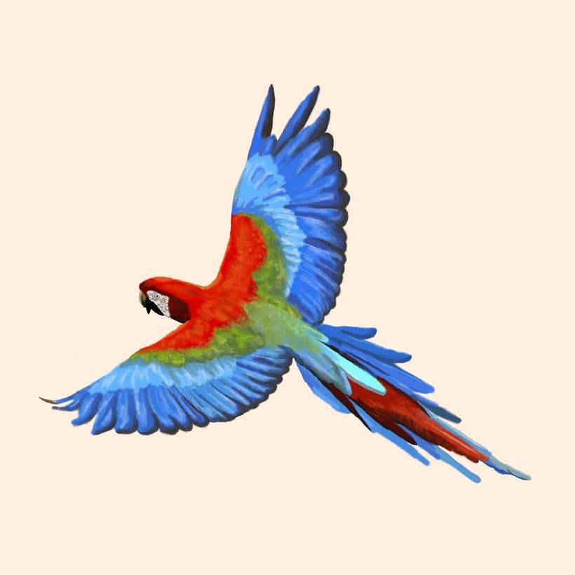 Aves - Biodiversidad 16