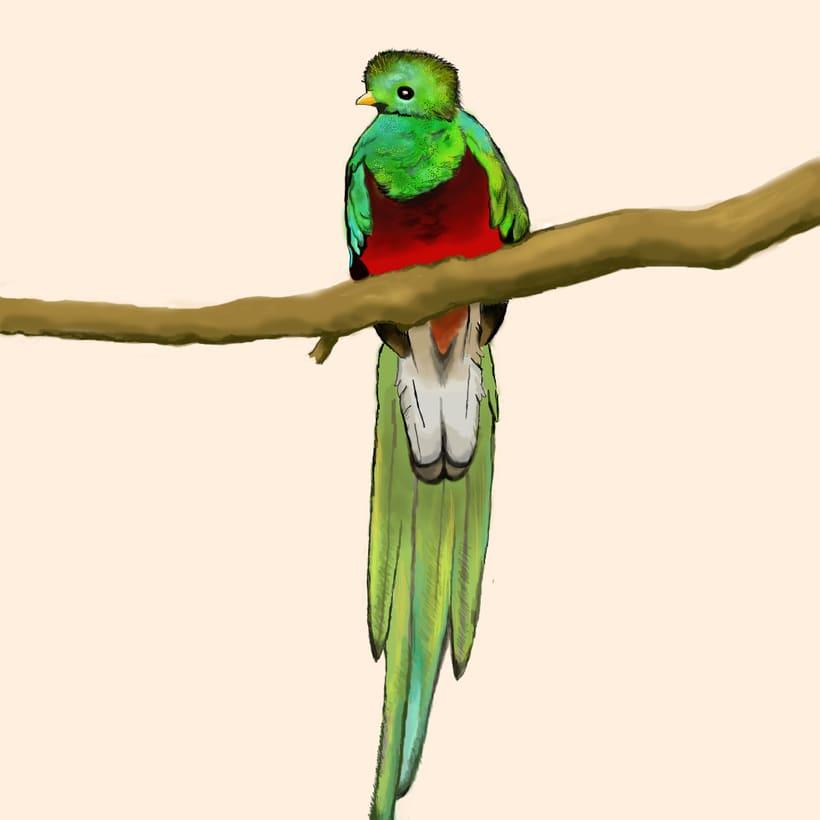 Aves - Biodiversidad 17