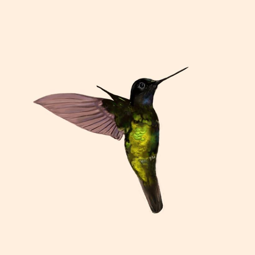 Aves - Biodiversidad 19