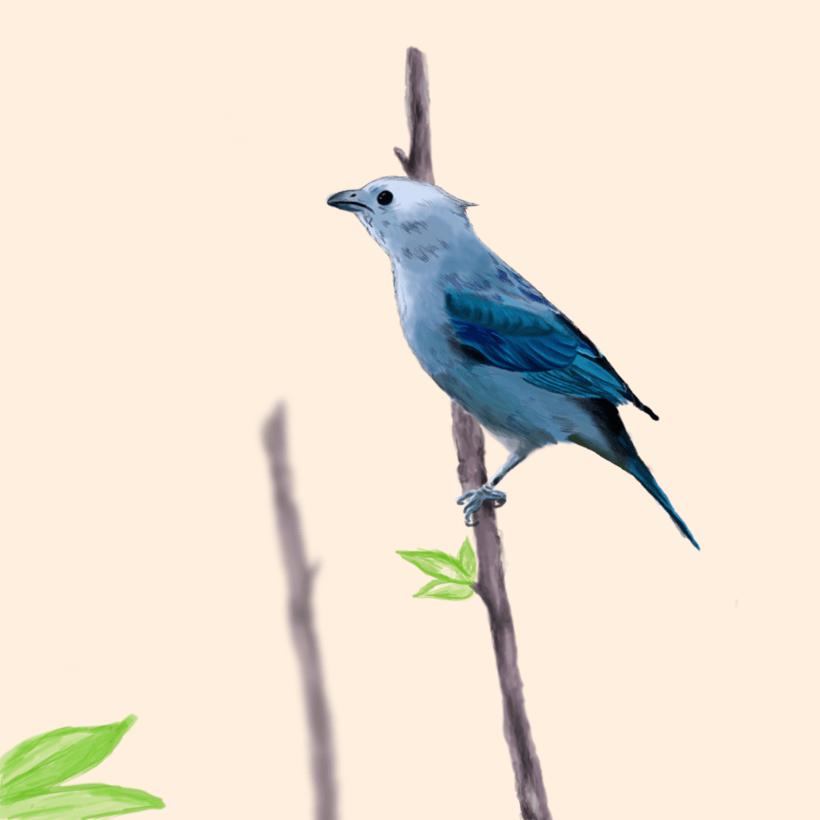 Aves - Biodiversidad 20