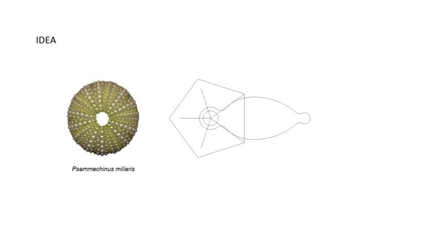 Lámpara Echinus -1