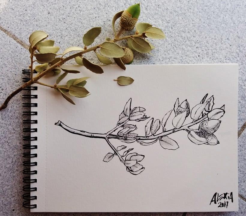 Ilustraciones 2017 42
