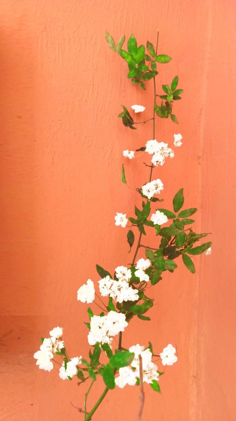 diseño flores 4