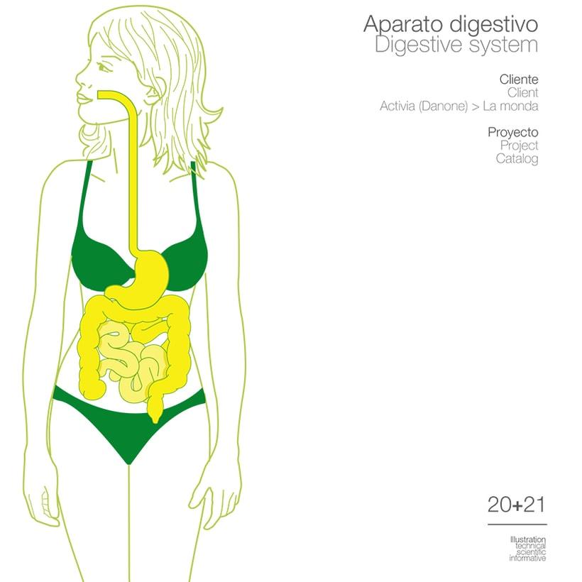 Aparato Digestivos • Danone 1