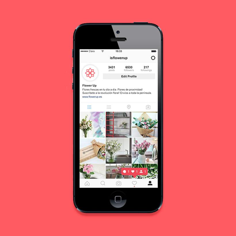 FlowerUp  |  Flores frescas en tu día a día 10