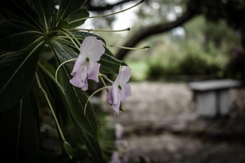 Fotografía. Flores -1