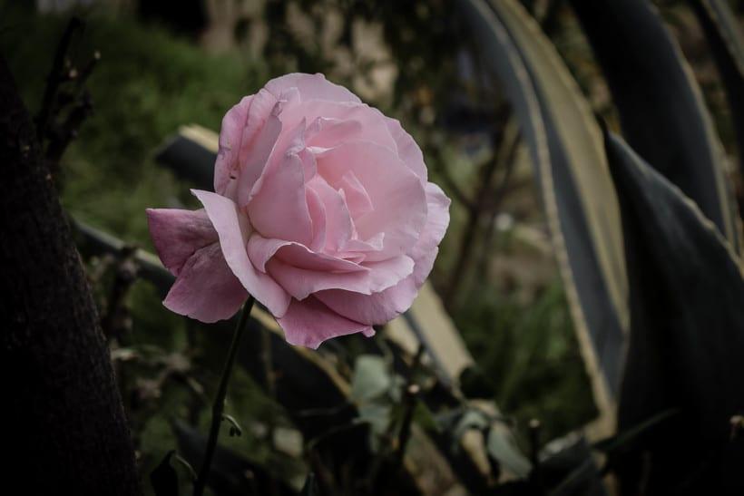Fotografía. Flores 0