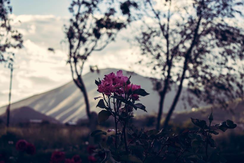 Fotografía. Flores 1