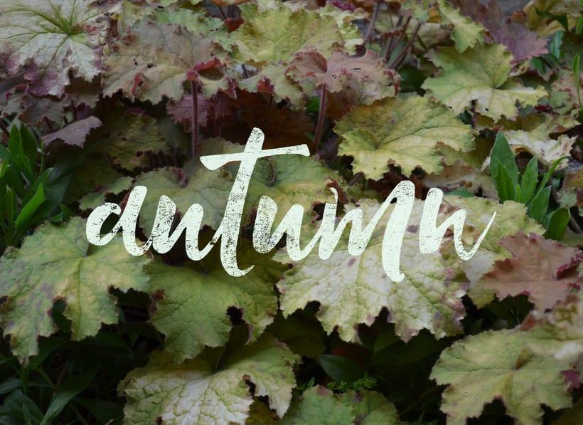 Autumn | Lettering -1