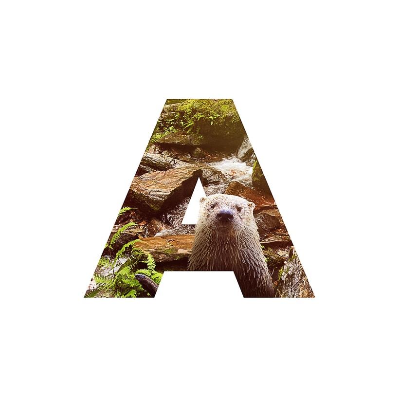 Amazonas 6