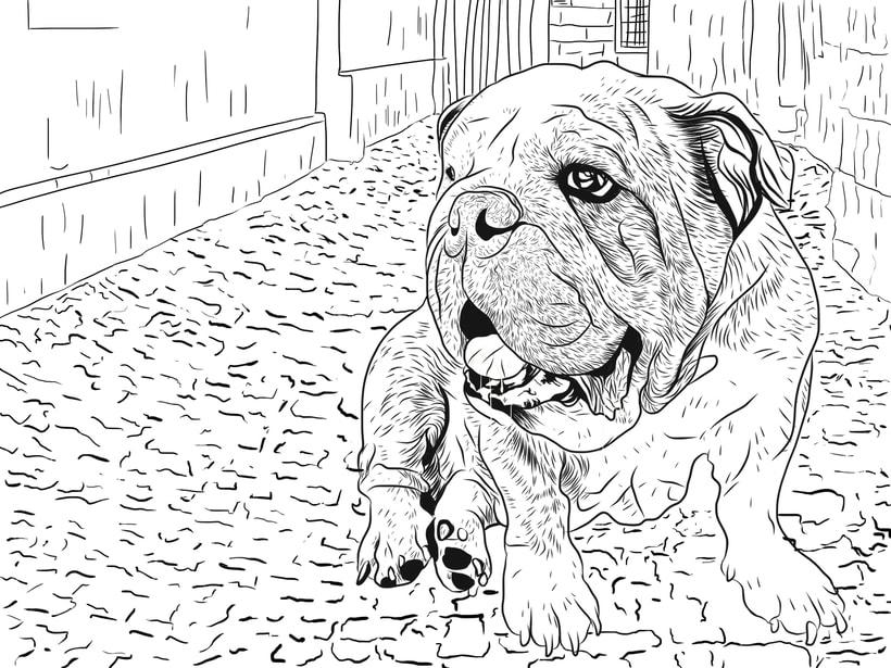 Bulldog 0