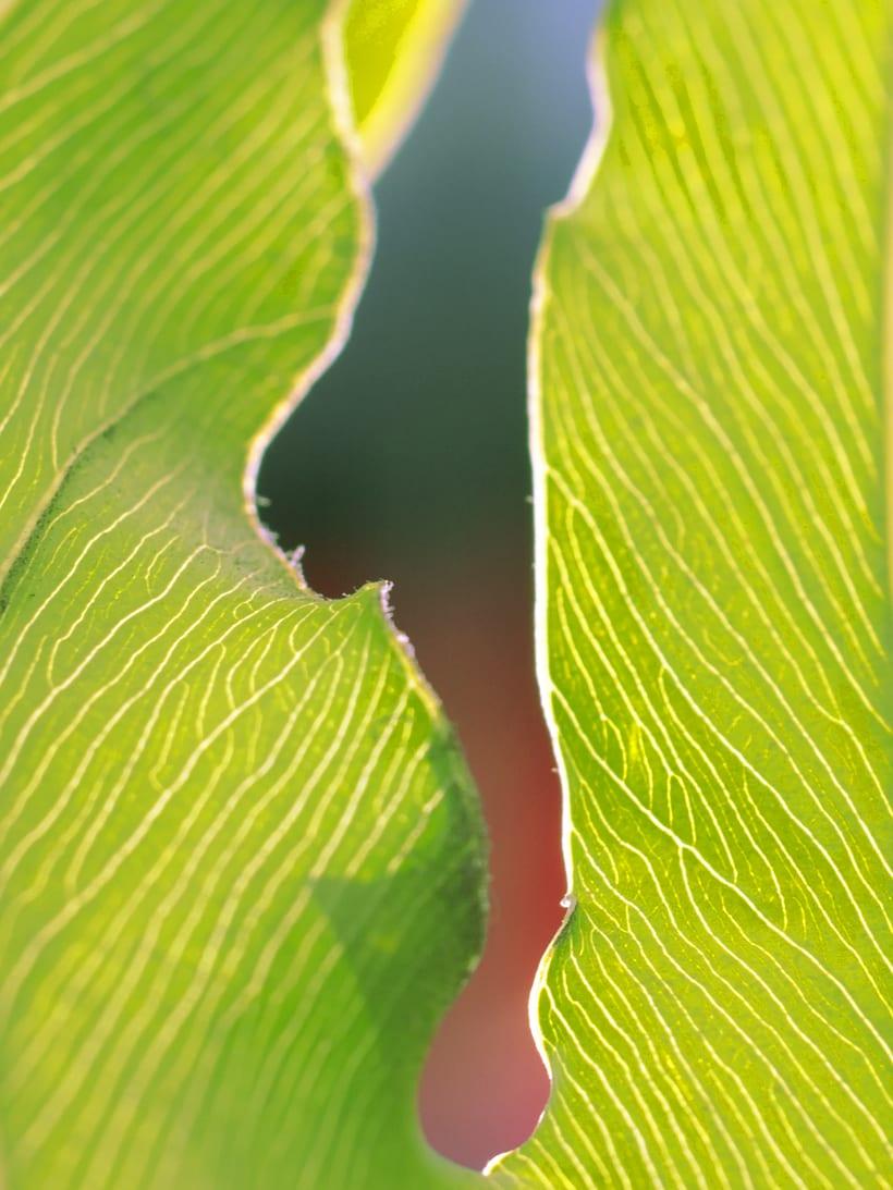 Naturaleza Abstracta  10