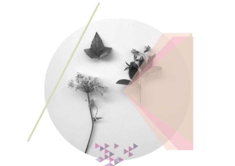 Collection : Botanica -1