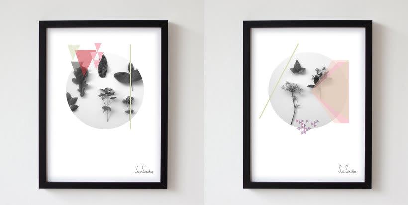 Collection : Botanica 2