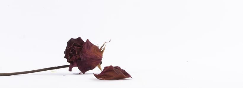 Fotografía Pymes - Carlota Iglesias 5