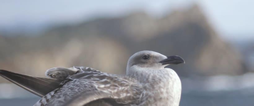 Isla Do Faro - Videopoema -1