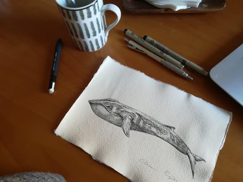Whale  0