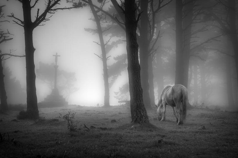 Reportaje caballos en la niebla -1