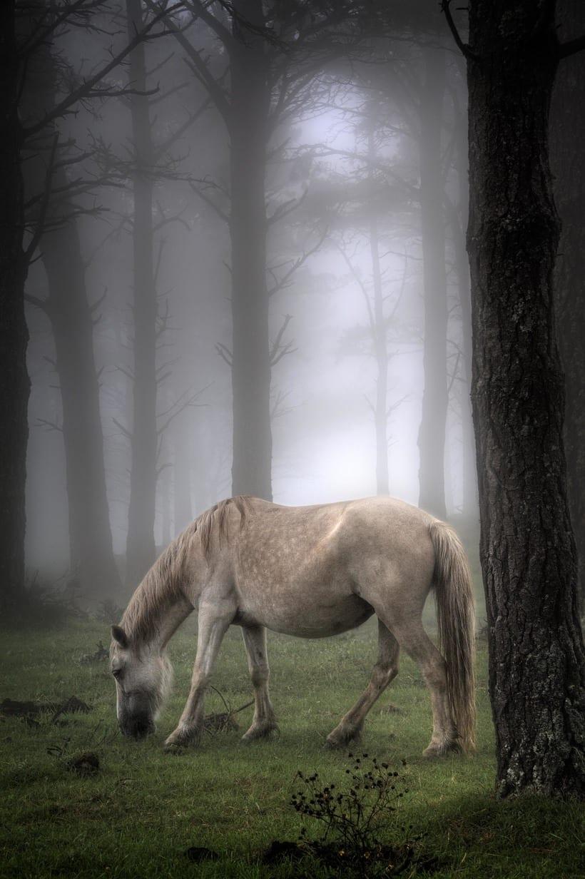 Reportaje caballos en la niebla 0