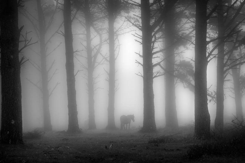 Reportaje caballos en la niebla 1
