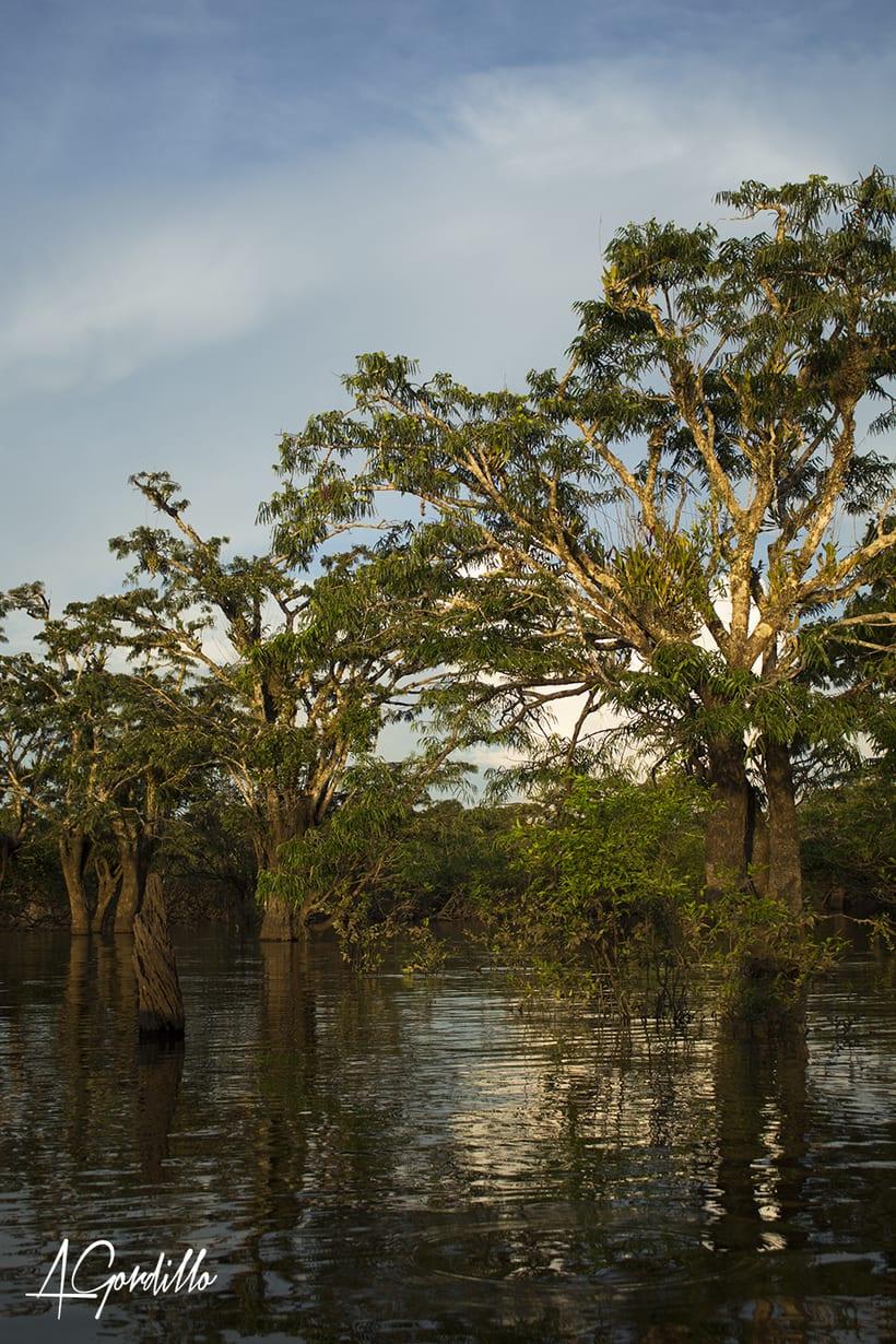 Fotografía Paisaje, Cuyabeno - Ecuador -1