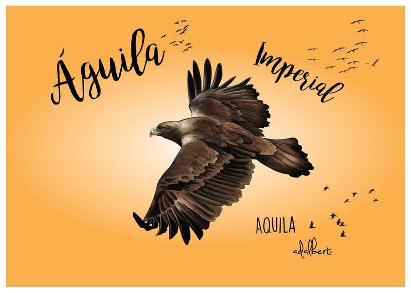 Aves 6